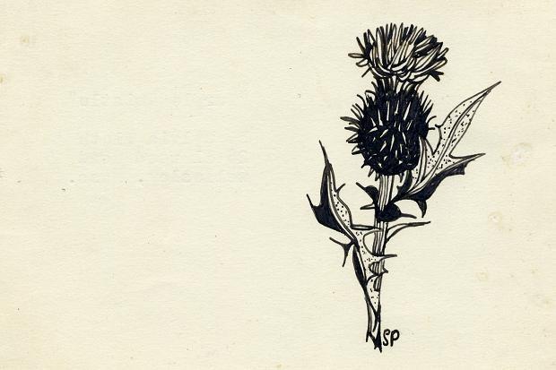 Plath-flor-smush